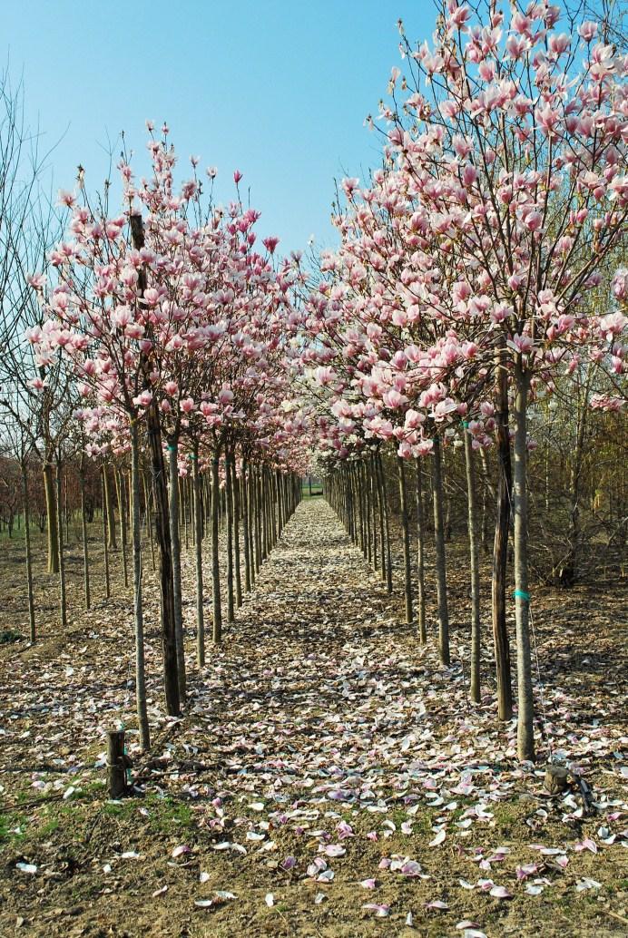 Fiori e piante nei giardini giardini e piante for Piante e giardini